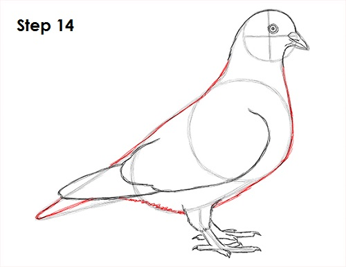 Draw Pigeon Bird 14