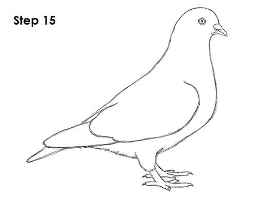 Draw Pigeon Bird 15
