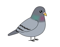 How to draw a Cartoon Pigeon