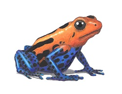 How to Draw a Poison Dart Frog Color