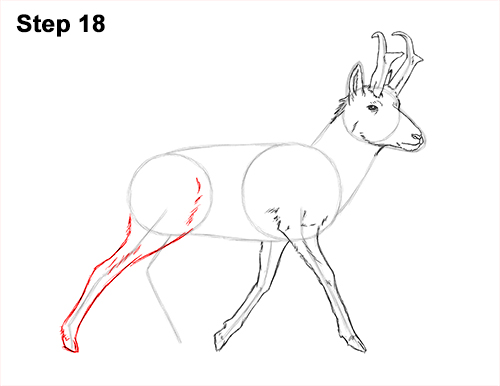 How to Draw a Pronghorn Anelope Buck Walking 18
