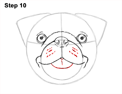 How to Draw Pug Puppy Dog Head Face Portrait 10
