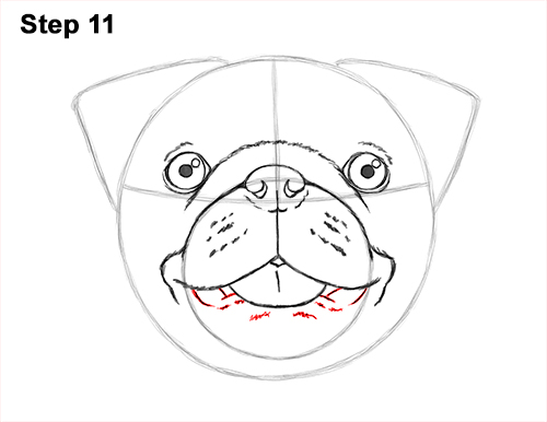 How to Draw Pug Puppy Dog Head Face Portrait 11