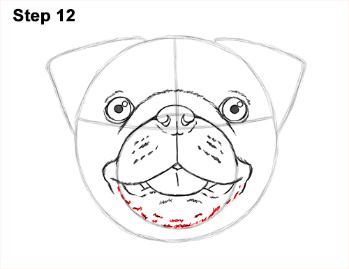How to Draw Pug Puppy Dog Head Face Portrait 12