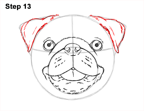 How to Draw Pug Puppy Dog Head Face Portrait 13