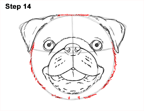 How to Draw Pug Puppy Dog Head Face Portrait 14