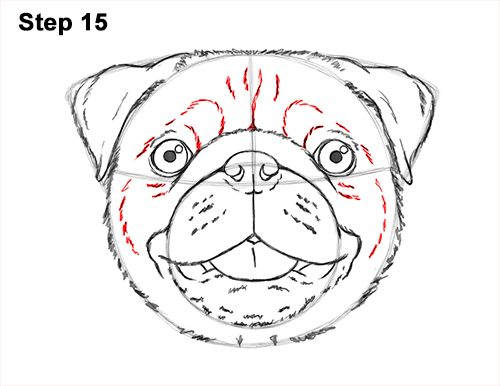 How to Draw Pug Puppy Dog Head Face Portrait 15