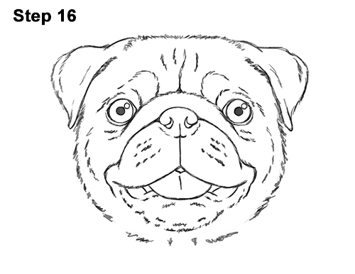 How to Draw Pug Puppy Dog Head Face Portrait 16