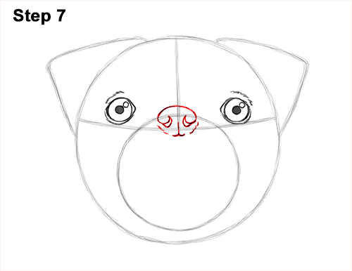 How to Draw Pug Puppy Dog Head Face Portrait 7