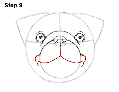How to Draw Pug Puppy Dog Head Face Portrait 9