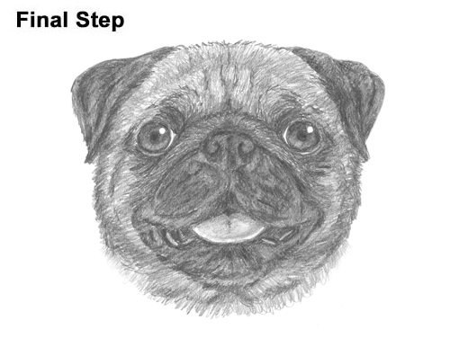 How to Draw Pug Puppy Dog Head Face Portrait