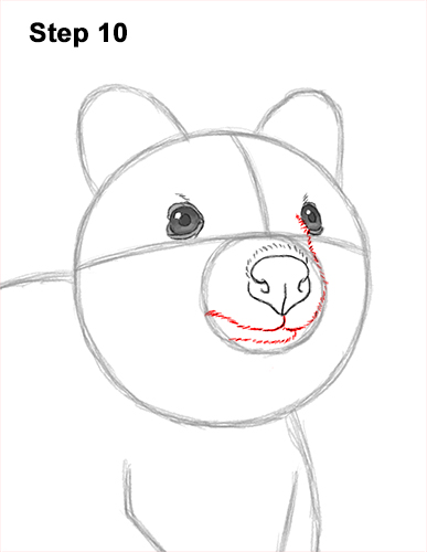 How to Draw a Smiling Quokka Short Tail Scrub Wallaby 10