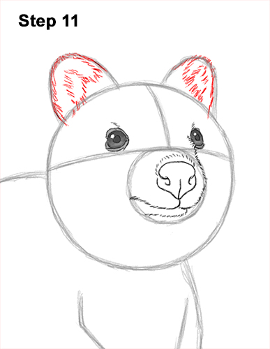 How to Draw a Smiling Quokka Short Tail Scrub Wallaby 11
