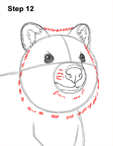 How to Draw a Smiling Quokka Short Tail Scrub Wallaby 12