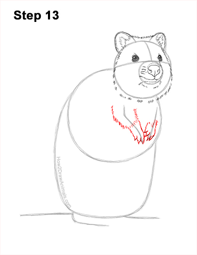 How to Draw a Smiling Quokka Short Tail Scrub Wallaby 13