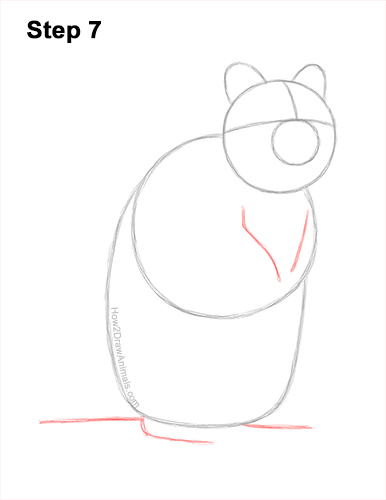How to Draw a Smiling Quokka Short Tail Scrub Wallaby 7