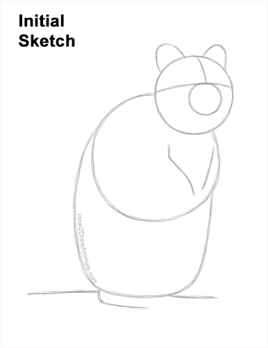 How to Draw a Smiling Quokka Short Tail Scrub Wallaby Guides Lines