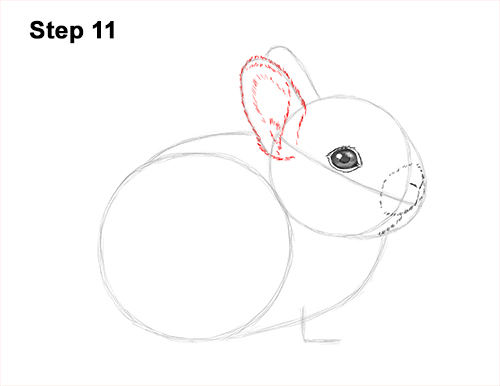 How to Draw a Cute Baby Bunny Rabbit 11