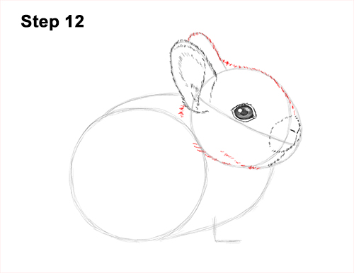 How to Draw a Cute Baby Bunny Rabbit 12