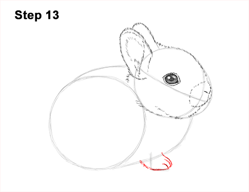 How to Draw a Cute Baby Bunny Rabbit 13