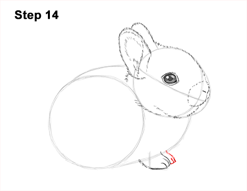 How to Draw a Cute Baby Bunny Rabbit 14