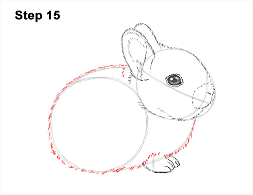How to Draw a Cute Baby Bunny Rabbit 15