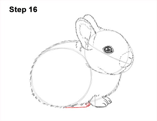 How to Draw a Cute Baby Bunny Rabbit 16