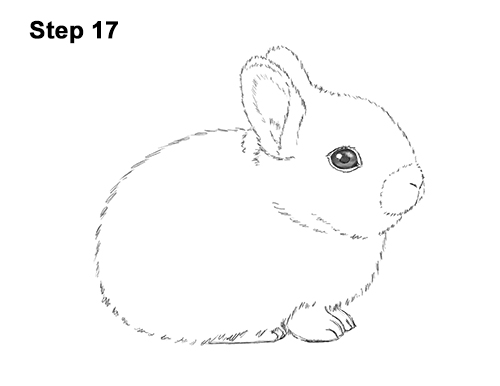 How to Draw a Cute Baby Bunny Rabbit 17