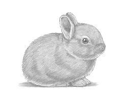 How to Draw a Baby Bunny Rabbit