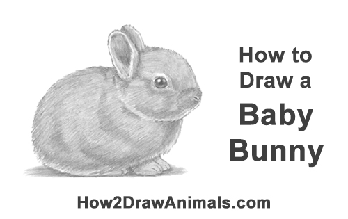How to Draw a Cute Baby Bunny Rabbit