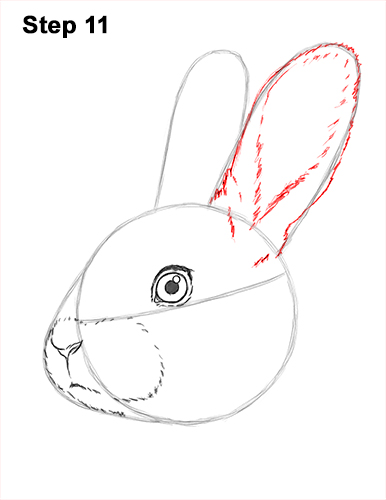 How to Draw Cute Bunny Rabbit Head Face Portrait 11