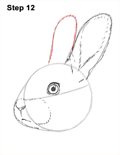 How to Draw Cute Bunny Rabbit Head Face Portrait 12