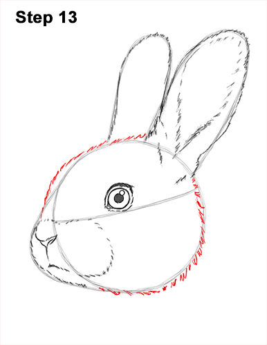How to Draw Cute Bunny Rabbit Head Face Portrait 13