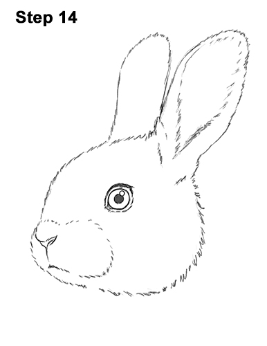 How to Draw Cute Bunny Rabbit Head Face Portrait 14