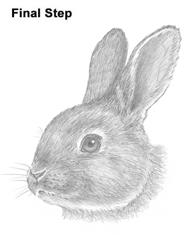 How to Draw Cute Bunny Rabbit Head Face Portrait