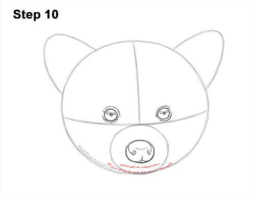 How to Draw a Raccoon Head Face Portrait 10