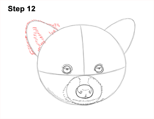 How to Draw a Raccoon Head Face Portrait 12