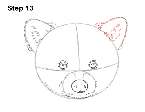 How to Draw a Raccoon Head Face Portrait 13