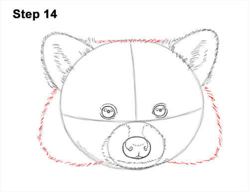 How to Draw a Raccoon Head Face Portrait 14
