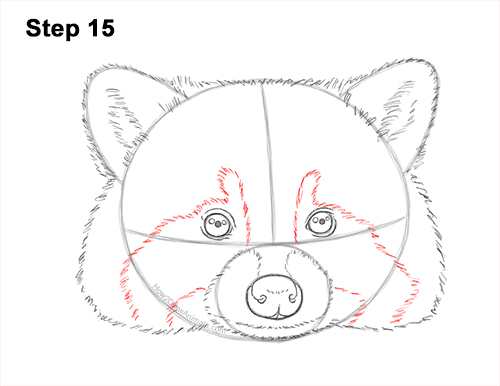 How to Draw a Raccoon Head Face Portrait 15