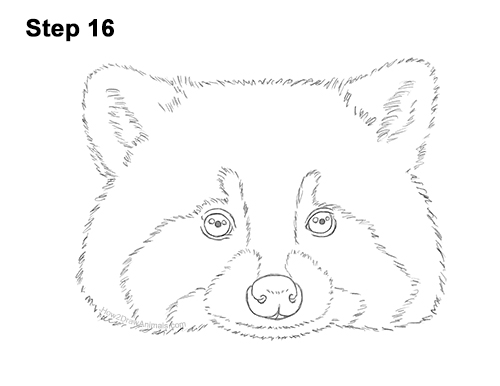 How to Draw a Raccoon Head Face Portrait 16