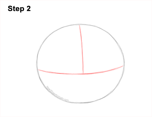 How to Draw a Raccoon Head Face Portrait 2