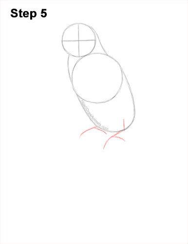 How to Draw Rainbow Lorikeet Bird 5
