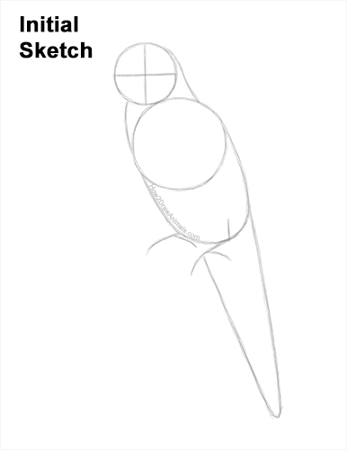 How to Draw Rainbow Lorikeet Bird Color Guides Lines