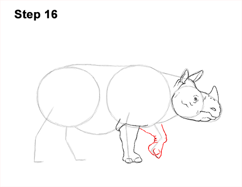 How to Draw an Indian Greater One Horned Rhinoceros 16