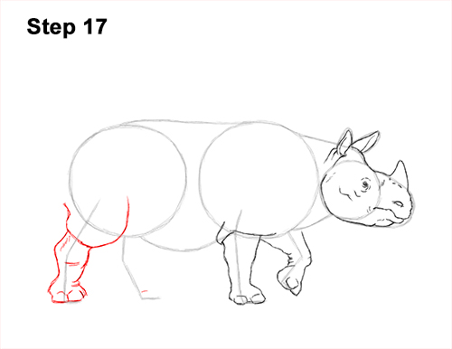 How to Draw an Indian Greater One Horned Rhinoceros 17