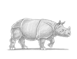 How to Draw a Greater One-Horned Indian Rhinoceros