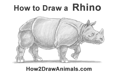 How to Draw an Indian Greater One Horned Rhinoceros