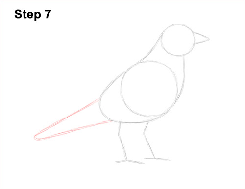 How to Draw an American Robin Bird Color 7