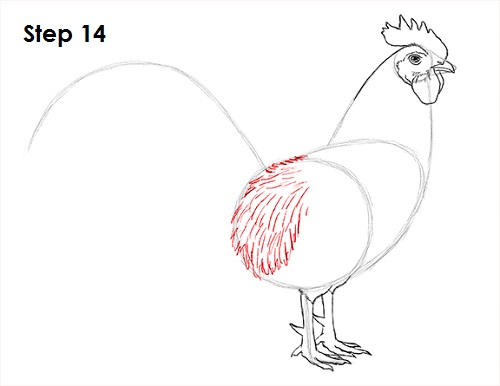 Draw Rooster 14